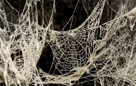 Spider Webs and Mucus