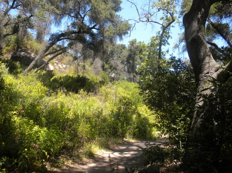 A Trail Through the Santa Barbara Botanic Garden