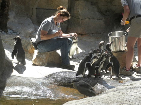 Friday Afternoon Penguin Feeding
