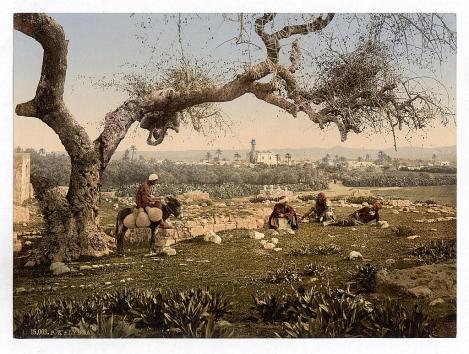The (Former) Palestinian City of Lydda