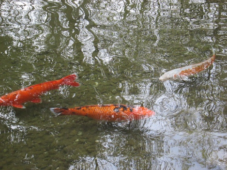 Koi at Descanso