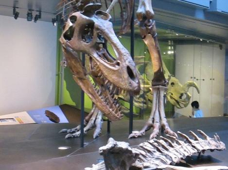 Dinosaur Skeleton at L.A.'s Natural History Museum