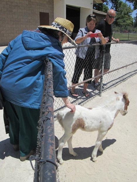 Martine Petting Foal