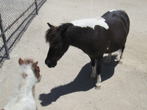 Miniature Mare and Her Foal