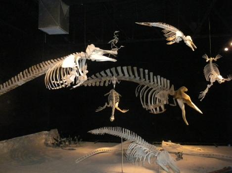 Exhibit at Trelew's Museo Paleontológico Egidio Feruglio