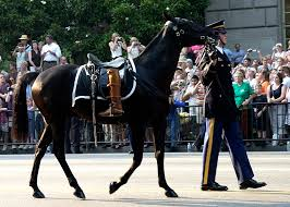 Blackjack, the Riderless Horse in JFK's Funeral Cortege