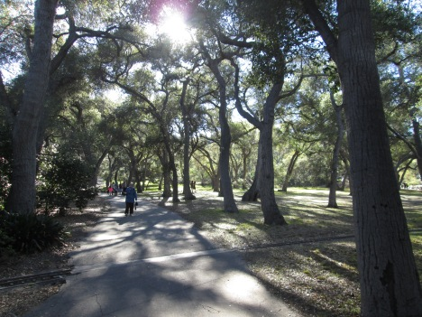 Pacific Coastal Oaks at Descanso