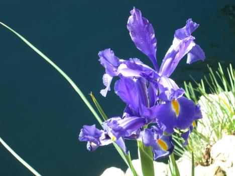 Flower at the Lake Shrine