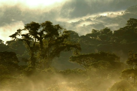The Cloud Forest Around Bellavista