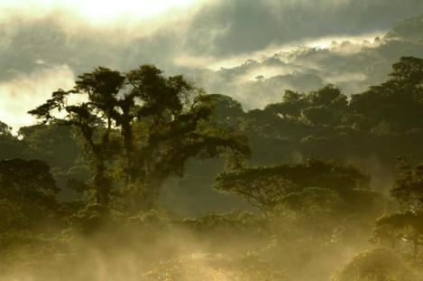 The Cloud Forest Around Bellavista
